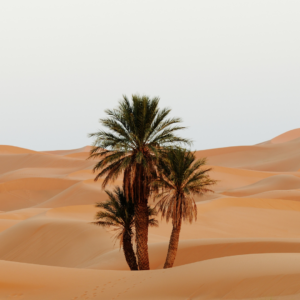 Desierto del Sáhara