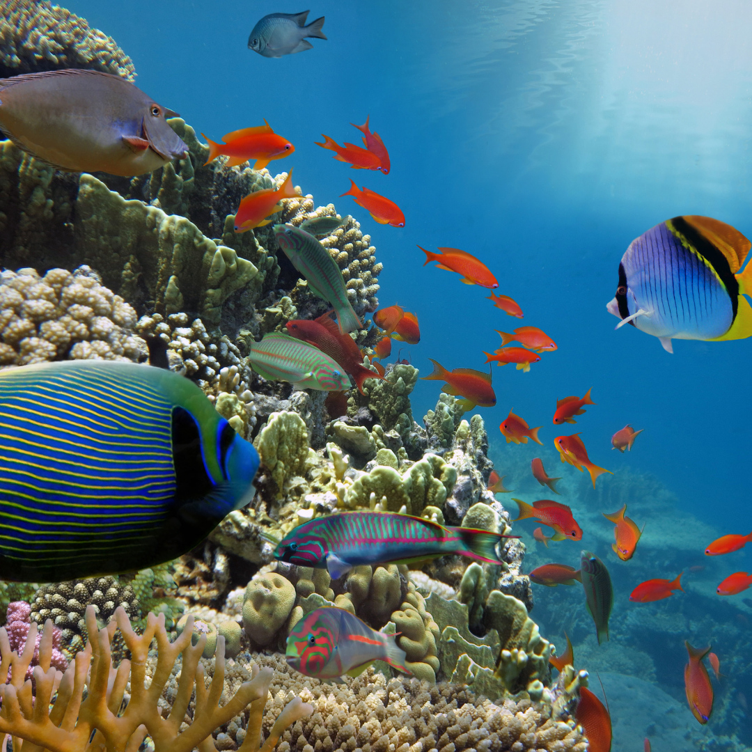 fondo marino con peces